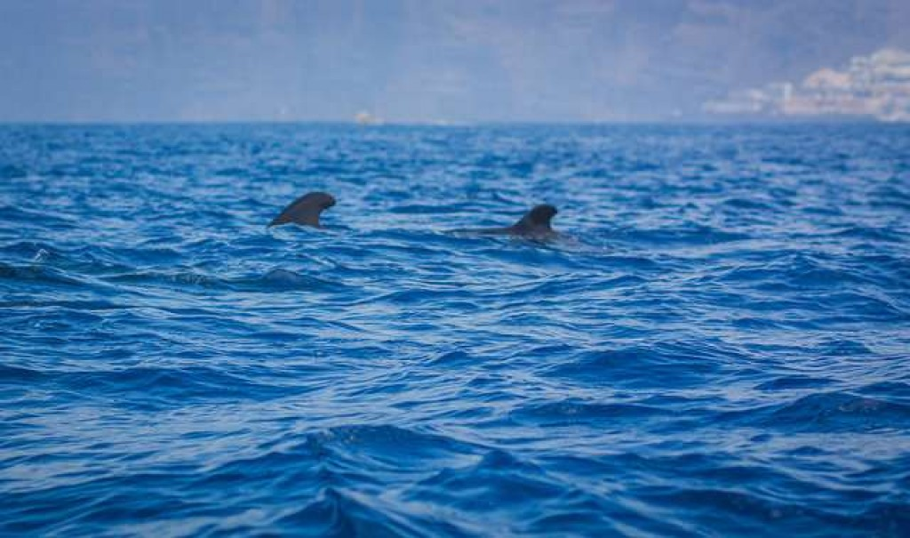 delfines tenerife con niños