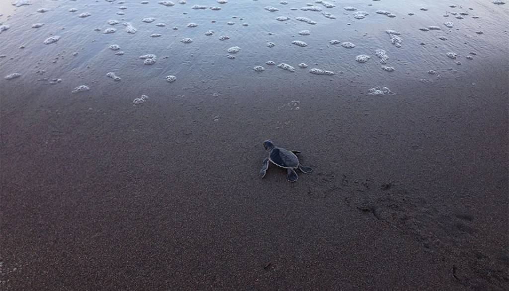 hotel para ver desove tortugas