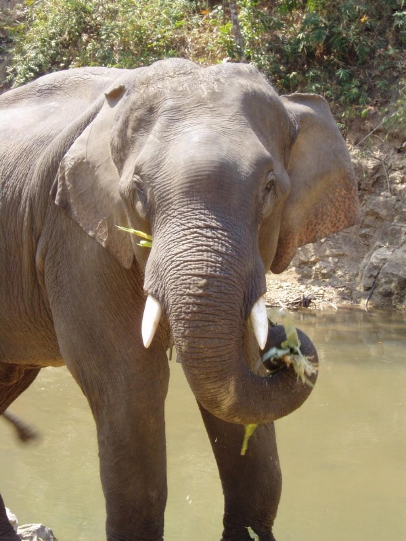 respeto elefantes en tailandia