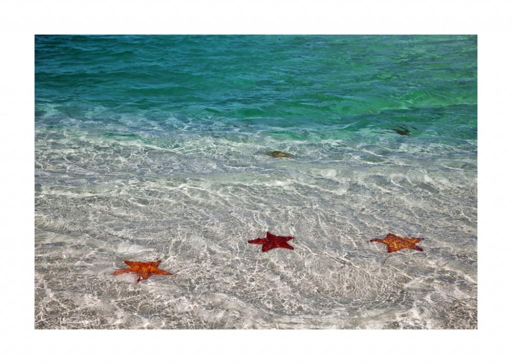 estrellas de mar en cuba