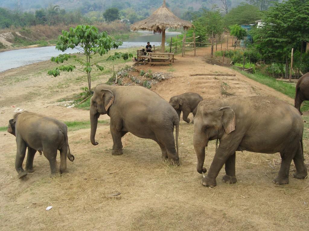elefantes en tailandia respeto