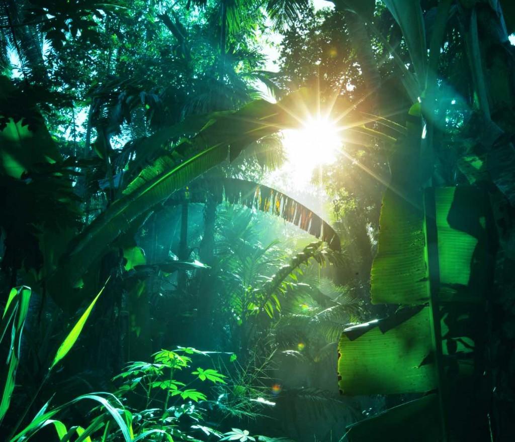 selva costa rica