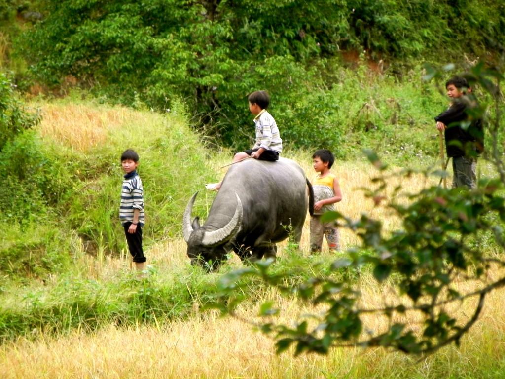 Niños jugando en los arrozales, Sapa, Vietnam