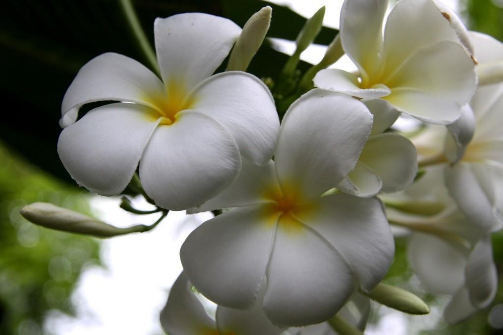 flora de maldivas